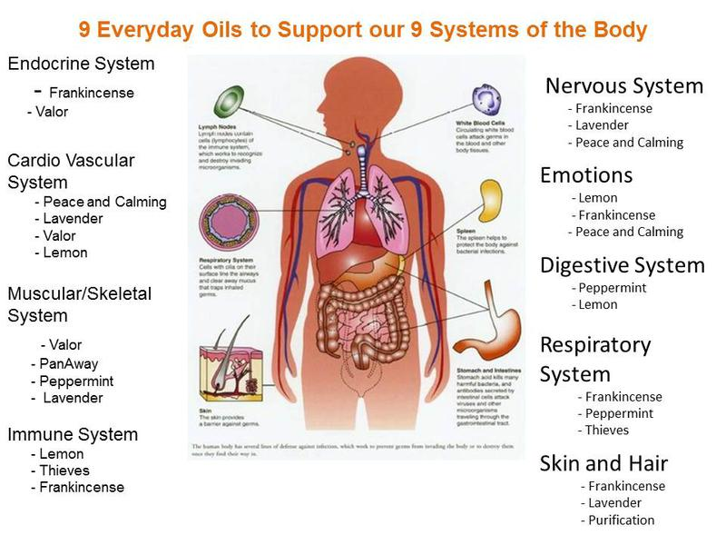 How Essential Oils Are Different And Why They Work So Well